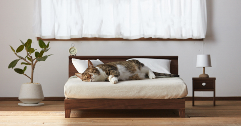 okawa kagu cat furniture