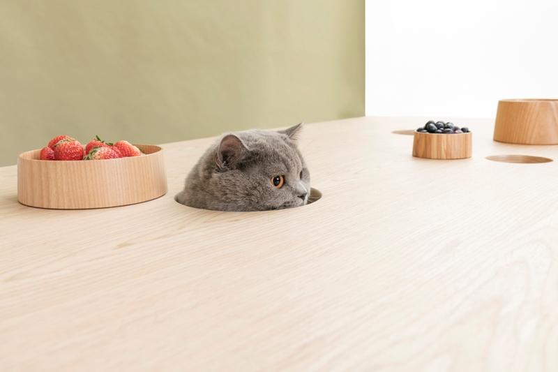 Arredi condivisi dedicati a gatti e persone