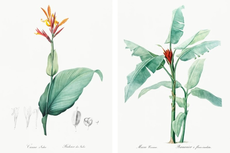 Illustrazioni Pierre-Joseph Redouté